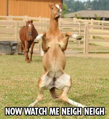 Neigh Neigh